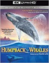 Humpback Whales (4K UHD)